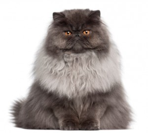 Meet Fluffy, the Surprising Hero of Your Content Career