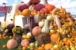 Gratitude visually represented by decorative gourds.