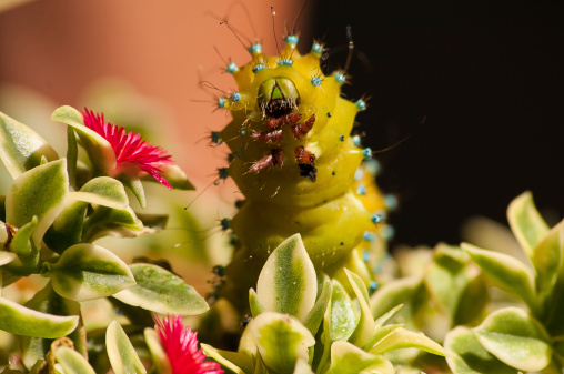 blog-hungry-caterpillar