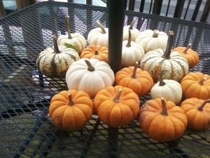 """Orangepumpkins, whitepumpkins, fall is in the air. Yummypumpkins, tastypumpkins, eat them if you dare."" - from Jennifer T"